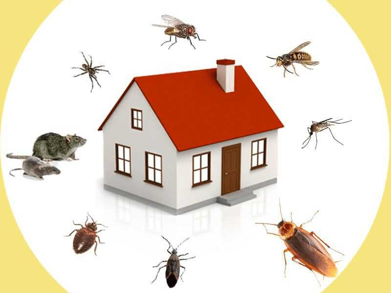 Top 7 Pest Control Franchise Businesses in India