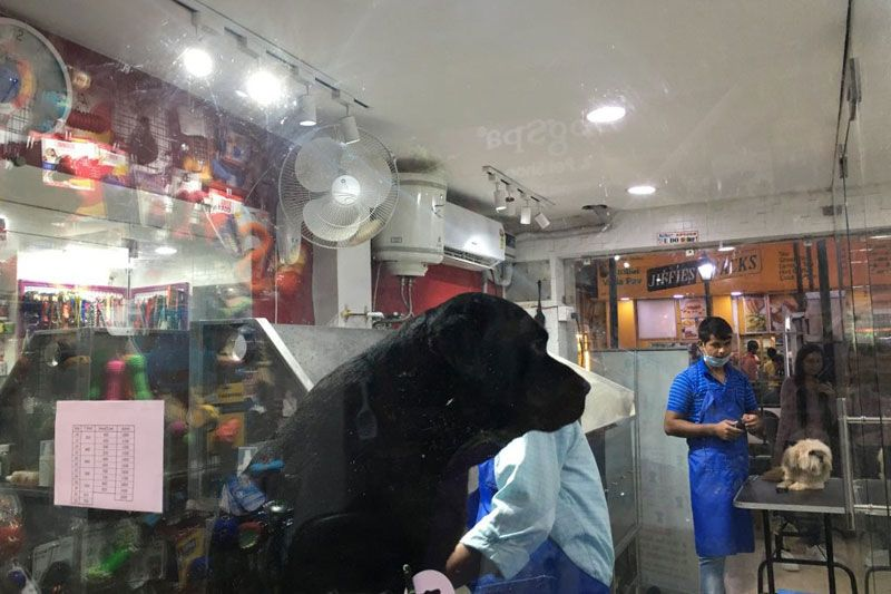 pet franchise india businesses grooming pets