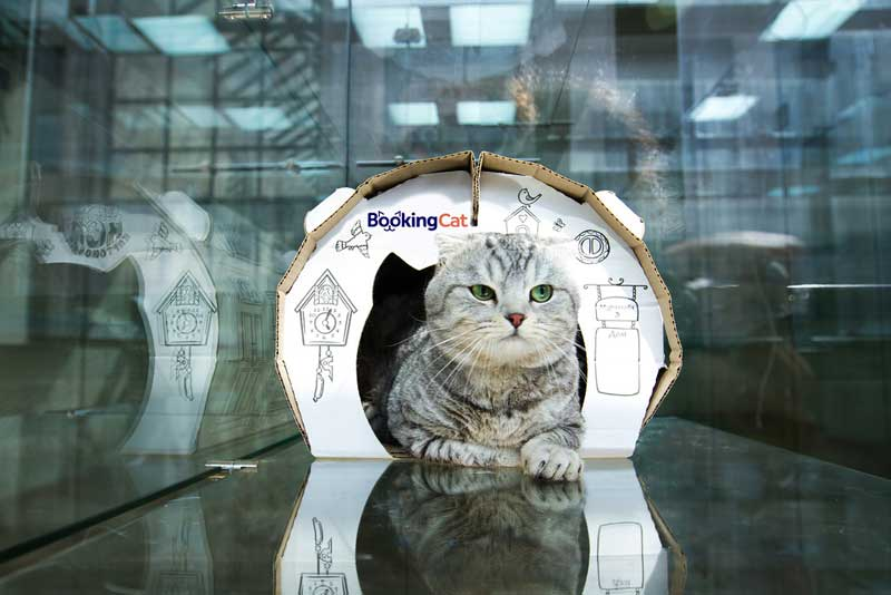 Pet franchise opportunities - Hotels Chain BookingCat